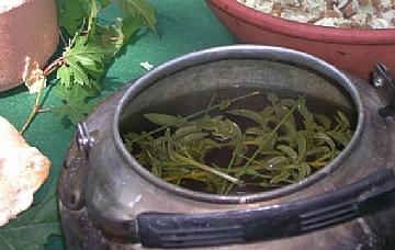 תה צמחים