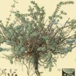 אוצר צמחי ארץ ישראל