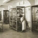 אפרים וחנה הראובני חוקרים את צמחי הארץ ומקימים מוזיאון