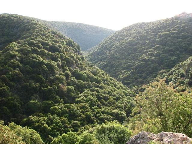 טָמוּס מִזְרָחִי - צמח החודש - פארק נאות קדומים