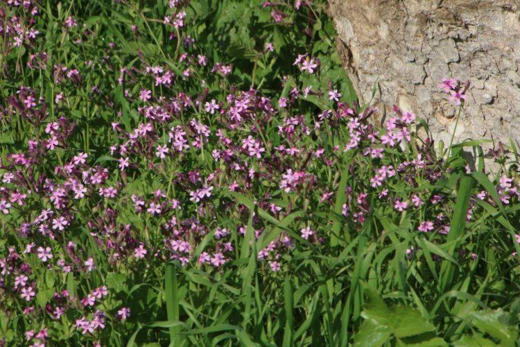 צמח החודש בפארק נאות קדומים